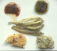 Brine Shrimp, Mysis Shrimp, Gamma Fish, Gamma Shrimp, Clams