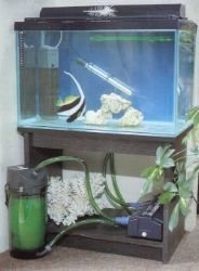 A simple quarantine tank is almost essential for a fish-only aquarium