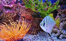 Aquarium with fish and corals