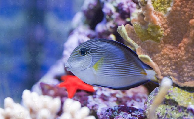 Closeup of butterfly fish – underwater shot