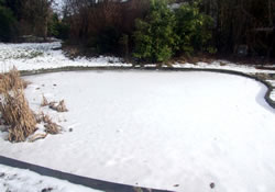 Caring for Your Fishpond in Winter Months