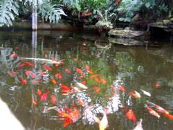 Goldfish Care & Breeding